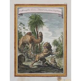 AFRICA LION CAMEL ANTIQUE PRINT ANTIQUE PRINT AFRICANISCHE LOEWE BELLIN 1750