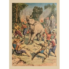 Capture of a white elephant Thailand Old Print 1910