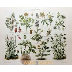 Poisonous plants II Antique Print 19th c. Meyer