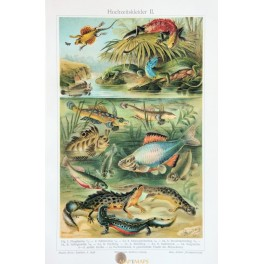 Lizards Old Antique Print of the qusamate reptiles. 1905