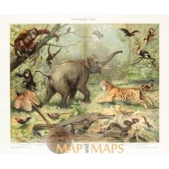 Animals, Antique Nature Print of Oriental fauna. 1905