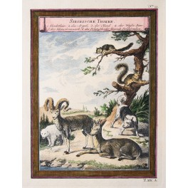 Siberian animals Original antique engraving Schey 1750