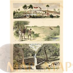 St. Thomas Islands Africa hunting antique print 1878