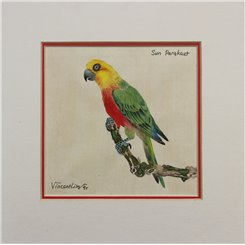 Sun Parakeet Original artist print Vincent Lim 95
