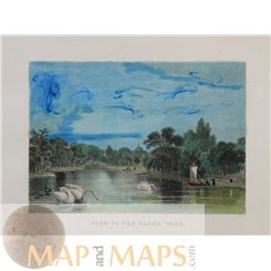 Netherlands old prints, The Hague Wood by Bartlett 1837